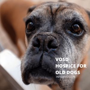 VOSD HOSPICE FOR OLD DOGS