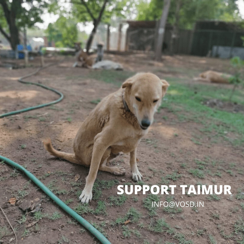 SUPPORT TAIMUR VOSD SANCTUARY