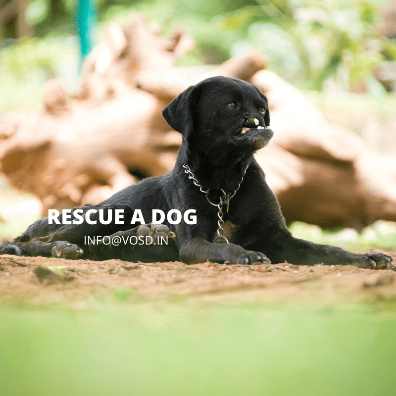 Rescue a dog | VOSD Sanctuary