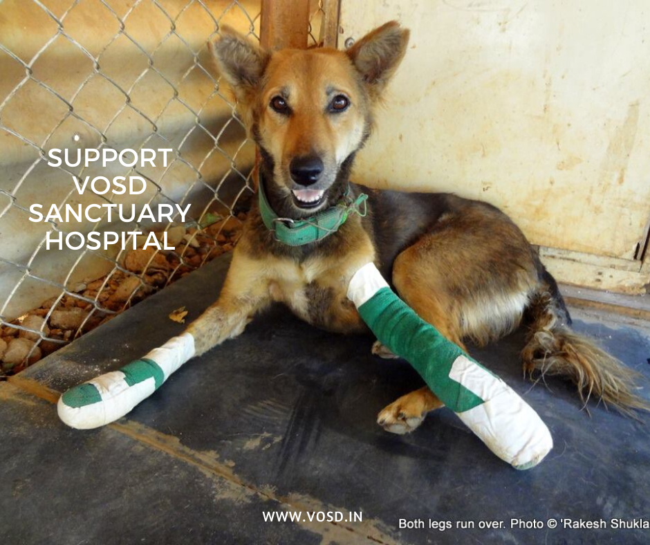 Support VOSD Sanctuary Hospital