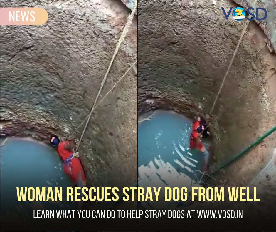 to show how the woman rescues a stray dog from a well